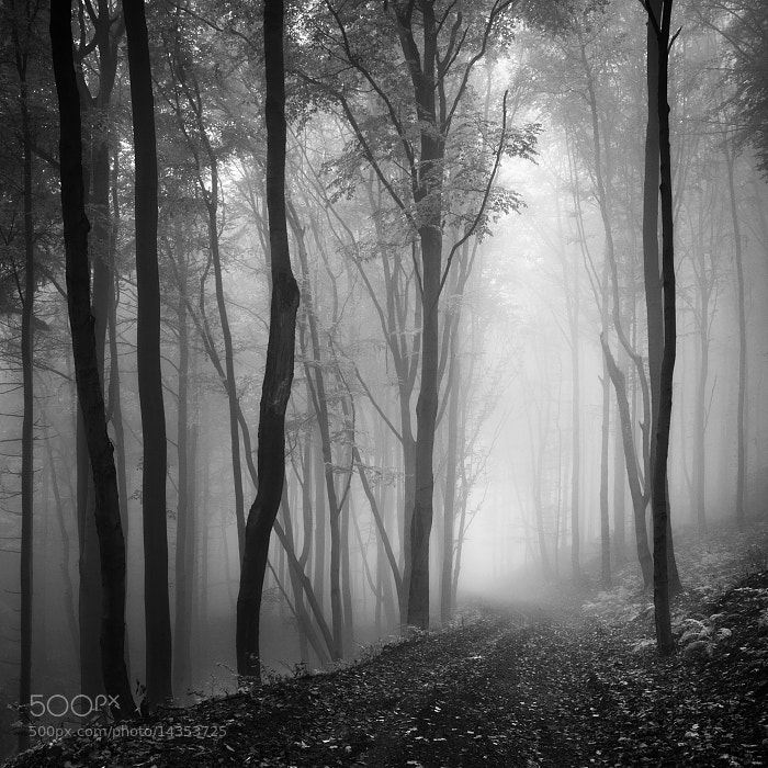 Photograph Misty forest by Daniel Řeřicha on 500px