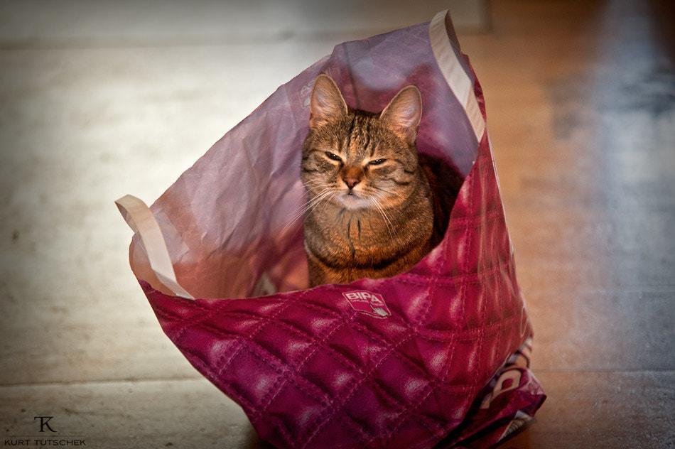 Photograph Cat in a bag by kurt tutschek on 500px