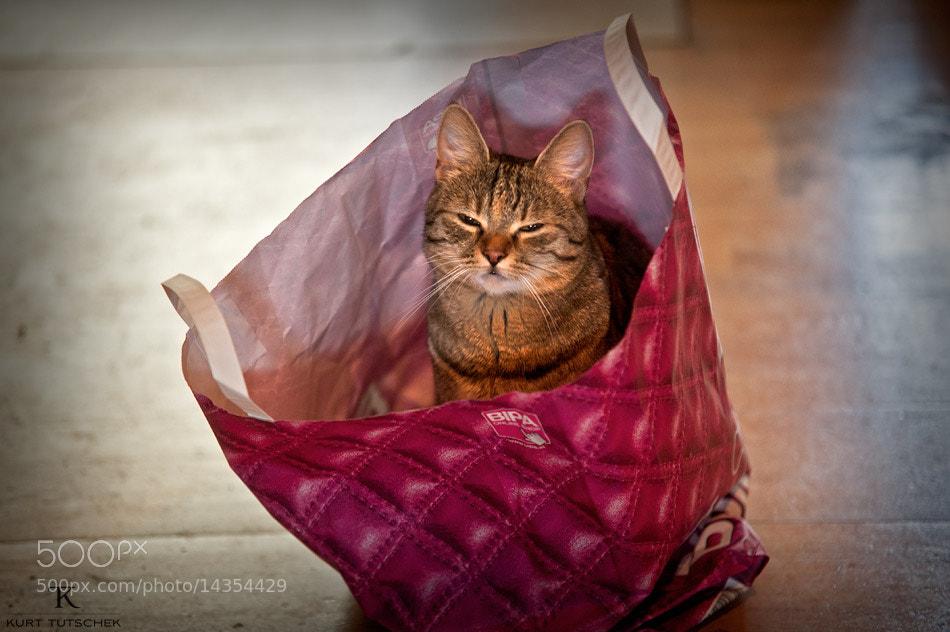 Photograph Cat in a bag by kurt tutschek on 500px