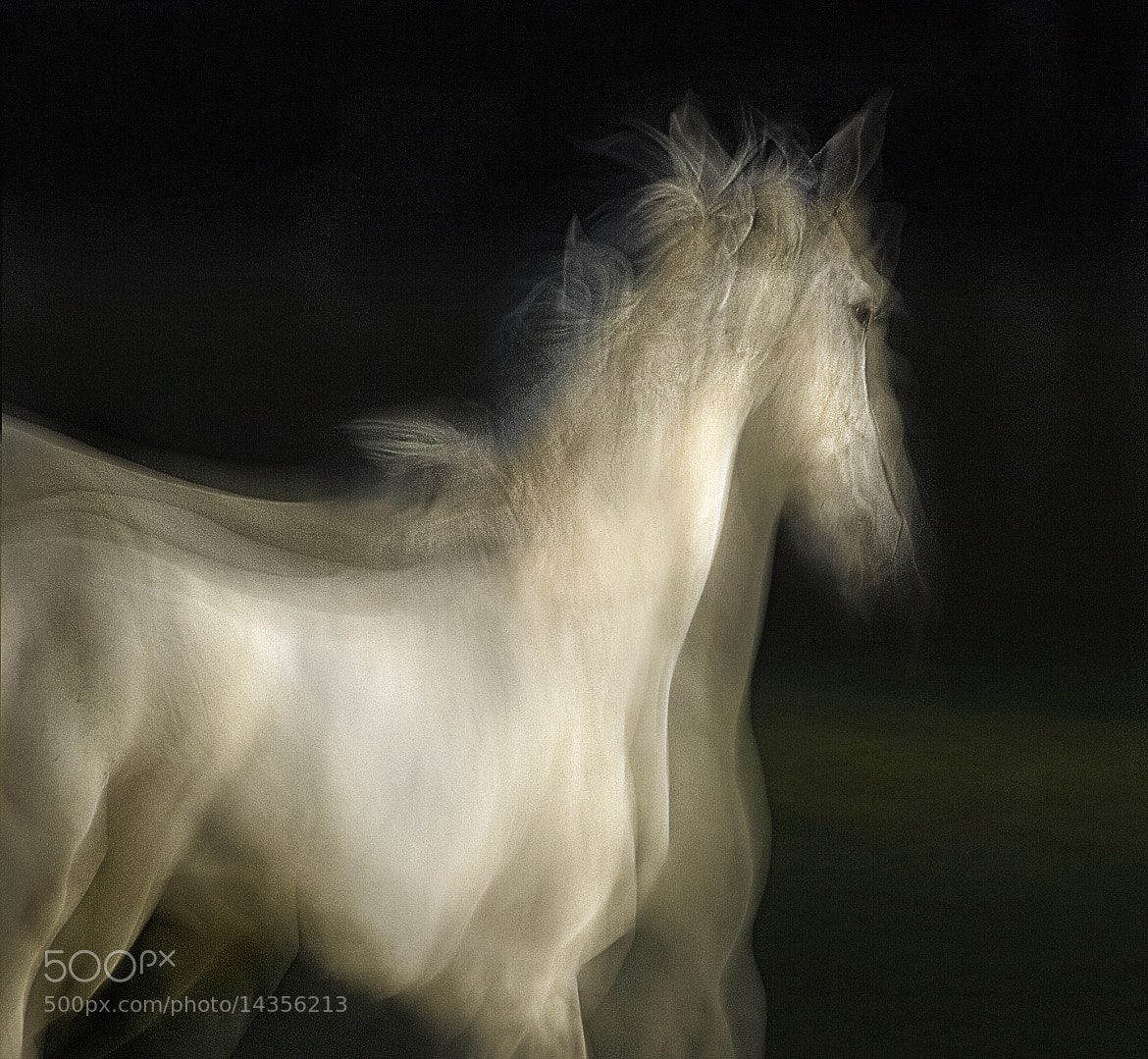 Photograph Lipizzian hors by Milan Malovrh on 500px