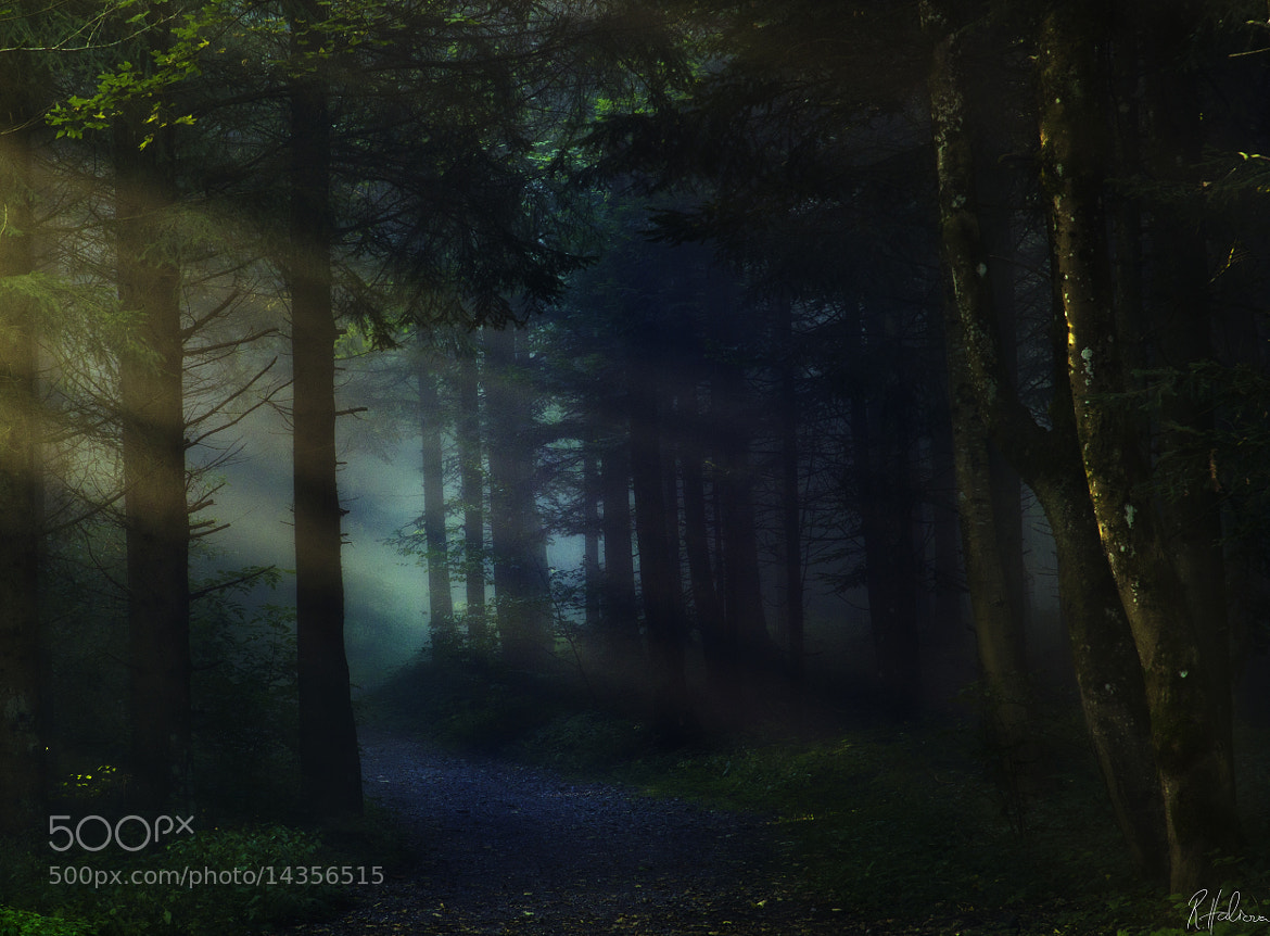Photograph Spooky Forest by Robin Halioua on 500px