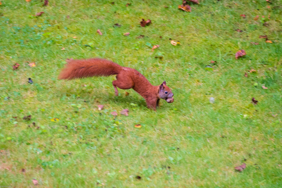 the squirrel has a lot to do this time and he is fast and beautiful