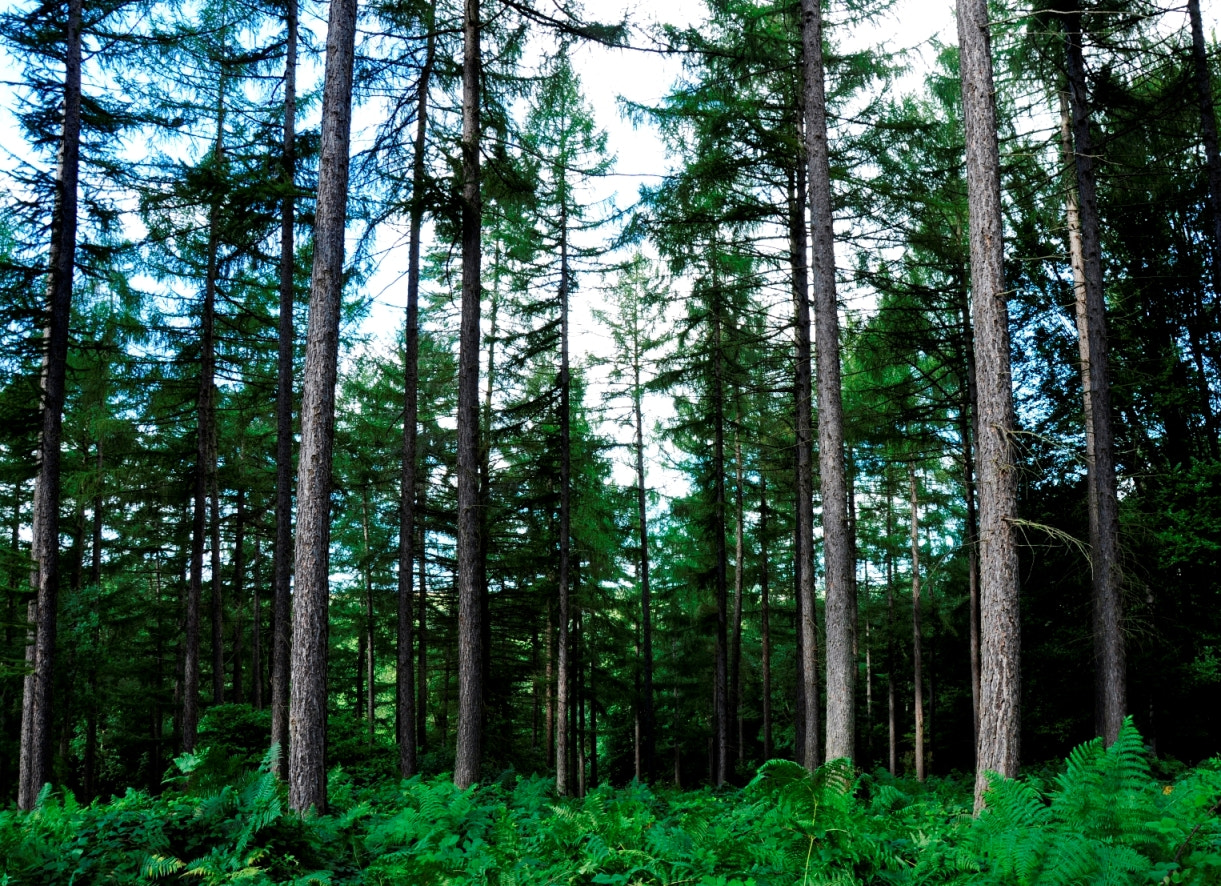 Photograph Down to the woods 7 by Adam Haworth on 500px