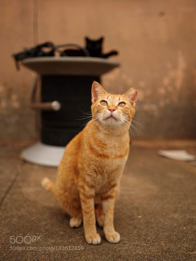 """Pentax 645Z sample photo. """"Ginger"""" photography"""