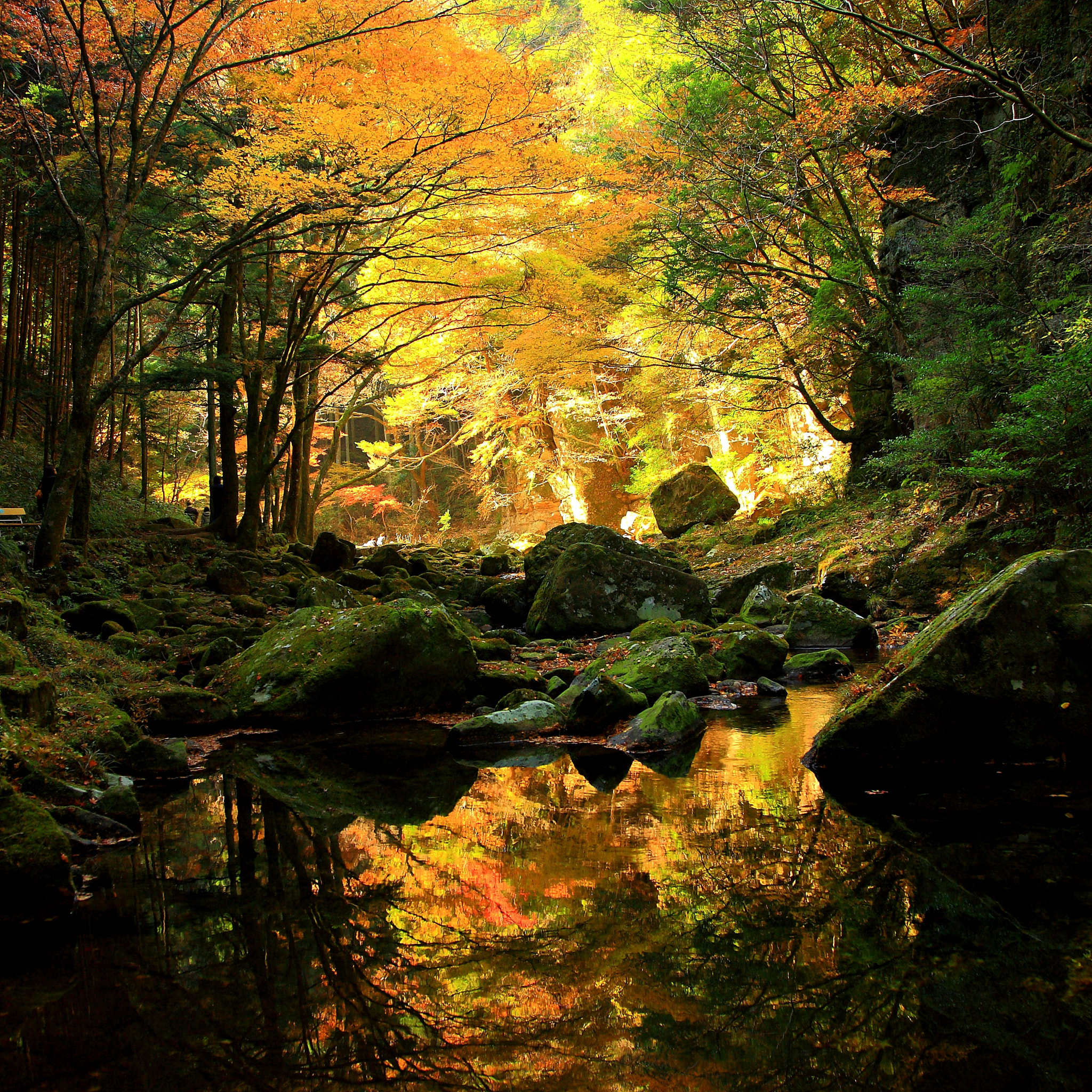 Photograph Ravine fall by yume . on 500px