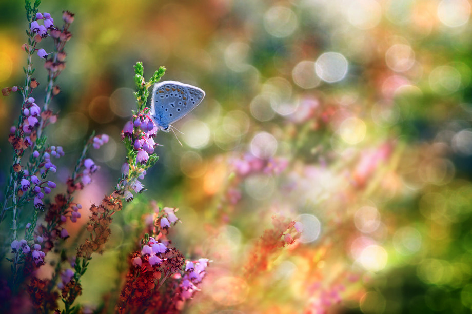 Photograph morning dreams II by ibrahim canakci on 500px