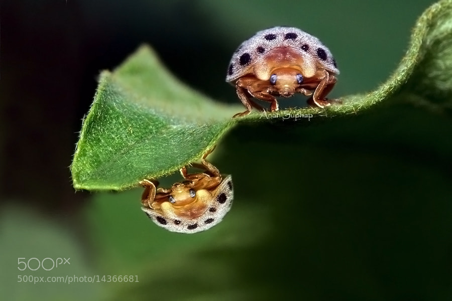 Photograph Double. by Anan Suphap on 500px