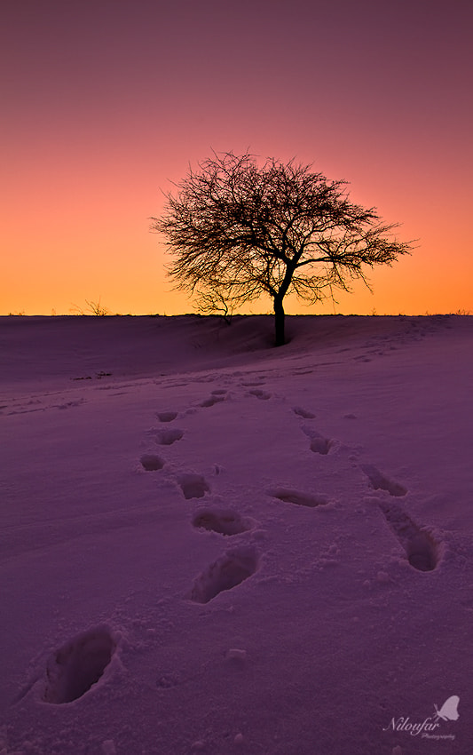Photograph Leading to the sun by Niloufar Hosein zadeh on 500px