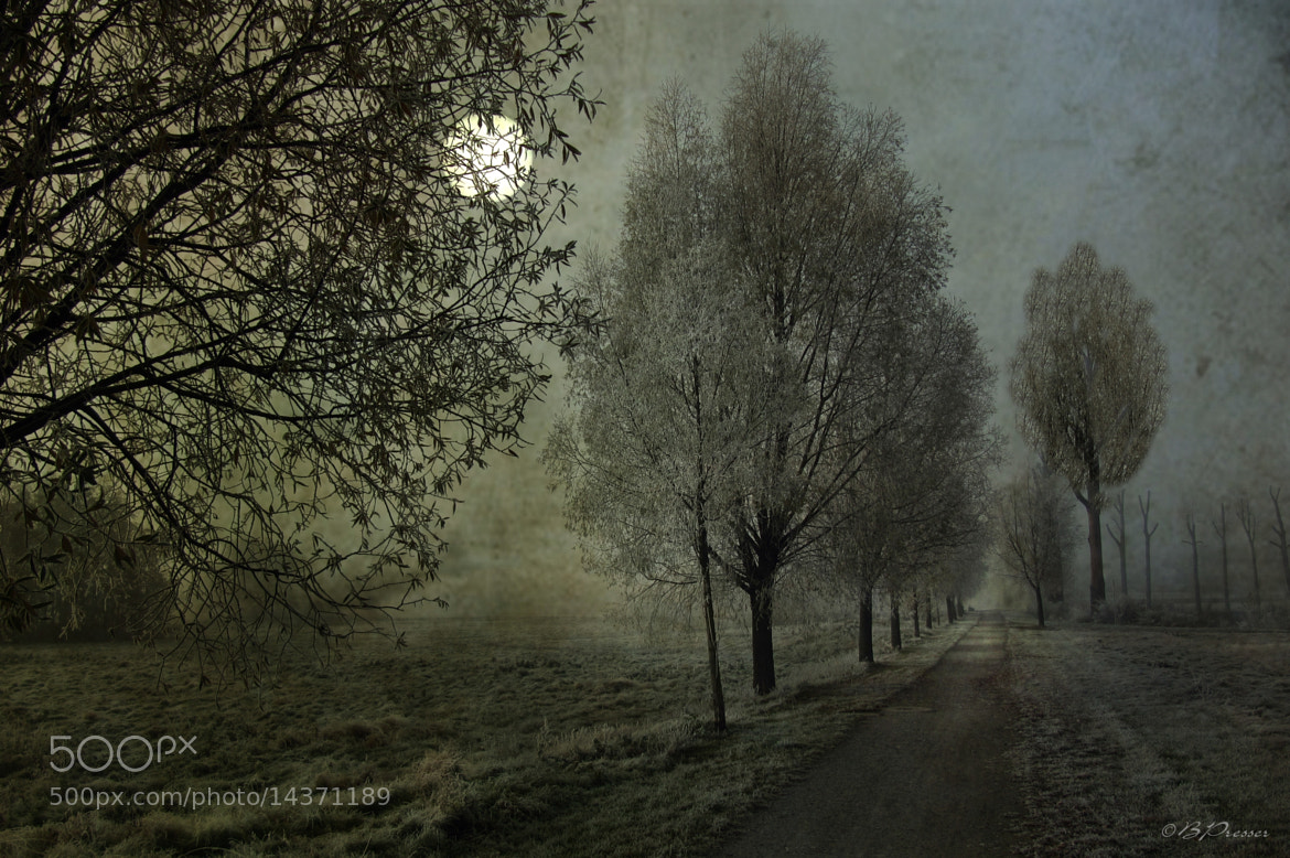 Photograph lonely way by Birgit Presser on 500px