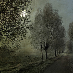 lonely way by Birgit Presser (birgitpresser)) on 500px.com
