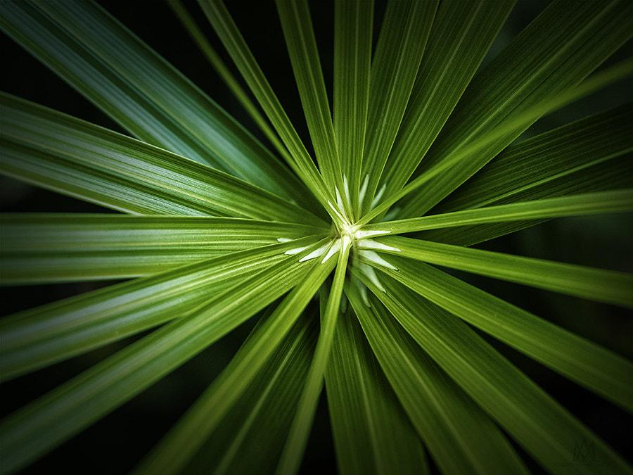 leaf spiral LR