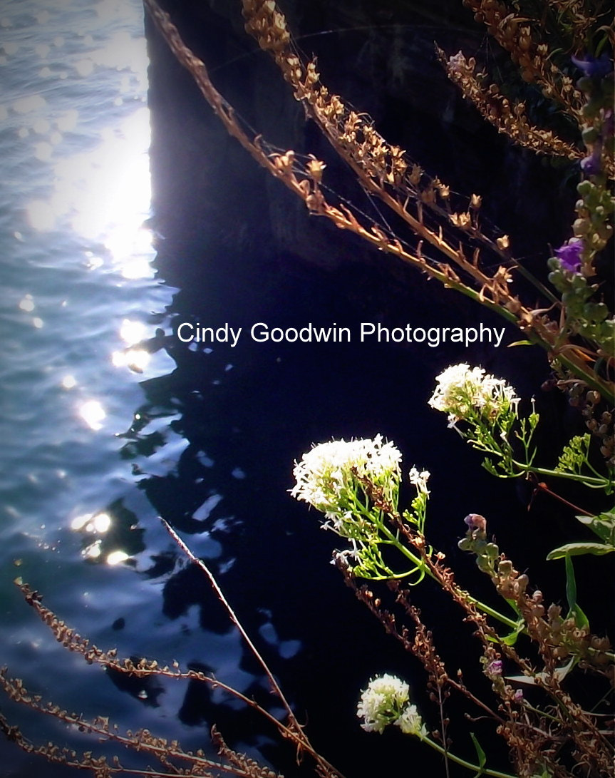 Photograph Harbour Flowers by Cindy Goodwin on 500px