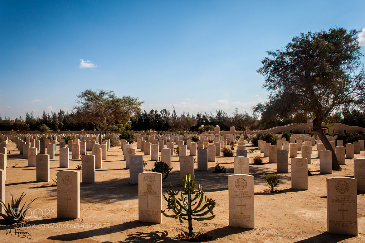 Photograph British Military Cemetery at El Alamein / Egypt  by Mohamed Hegazi on 500px