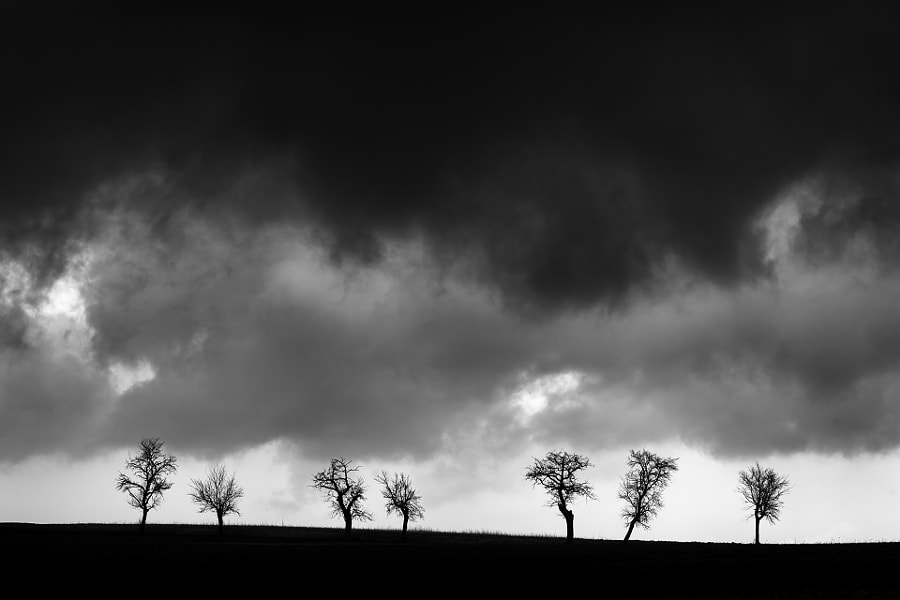 Seven Old Trees