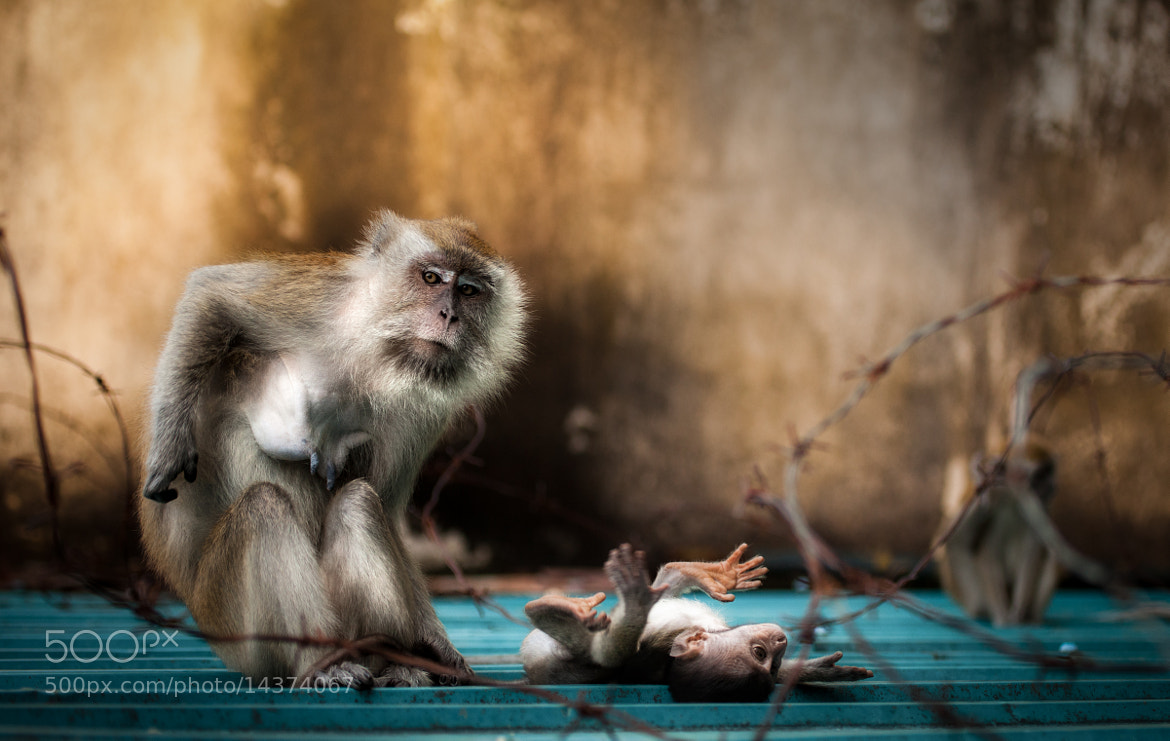 Photograph Monkey Business by Simon Linge on 500px
