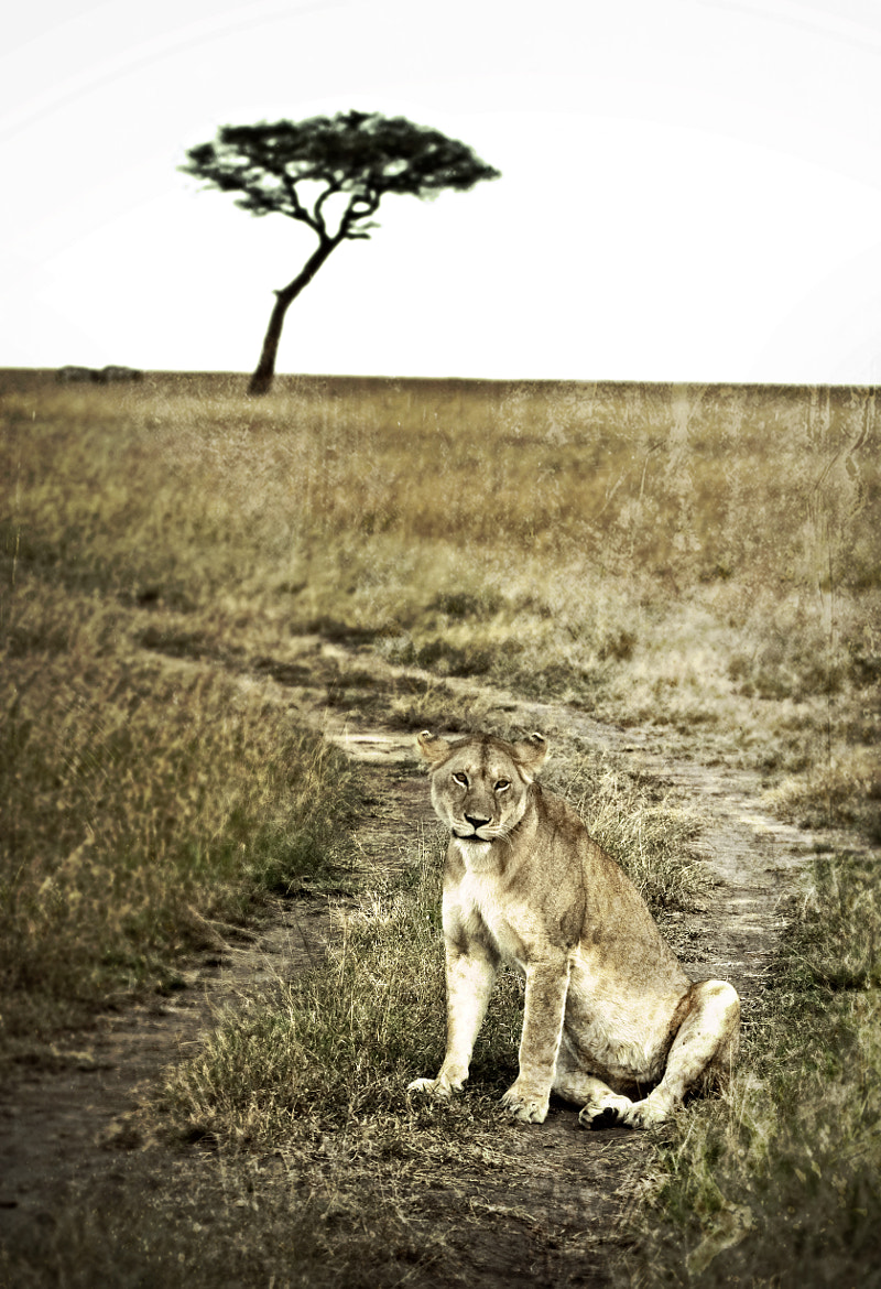 Photograph Born Free by Scott Denny on 500px