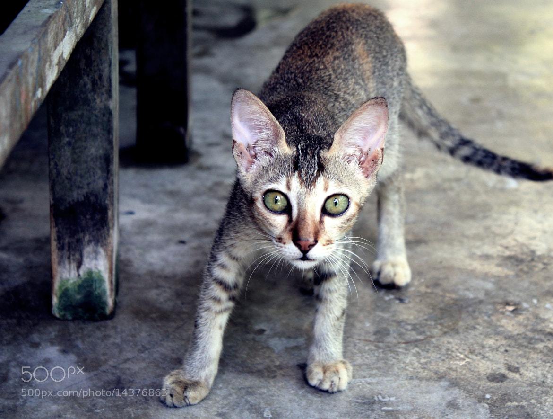 Photograph cat III by Amitrajit Niyogi on 500px