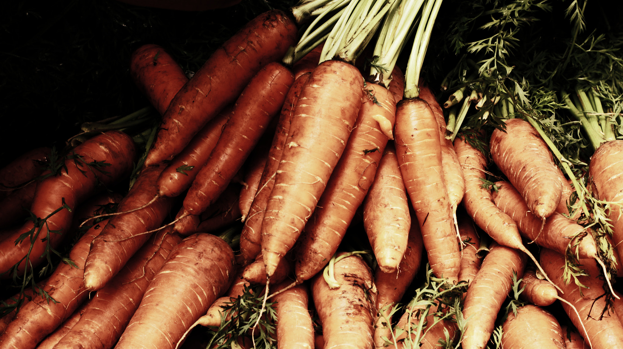 Photograph Turtle Bay Farmers Market - Carrots by Mike Collins on 500px