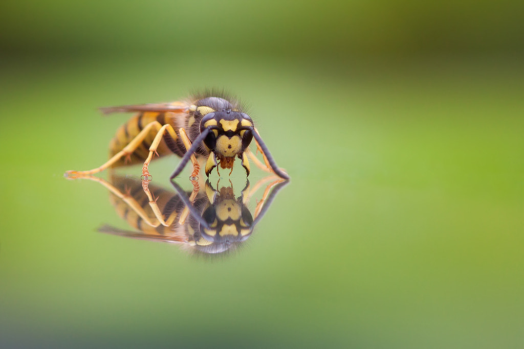 Photograph Come And Get Me If You Dare! by Daan de Vos on 500px
