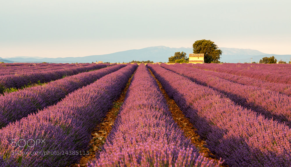 Photograph Colors of Provence by Francesco Vaninetti on 500px