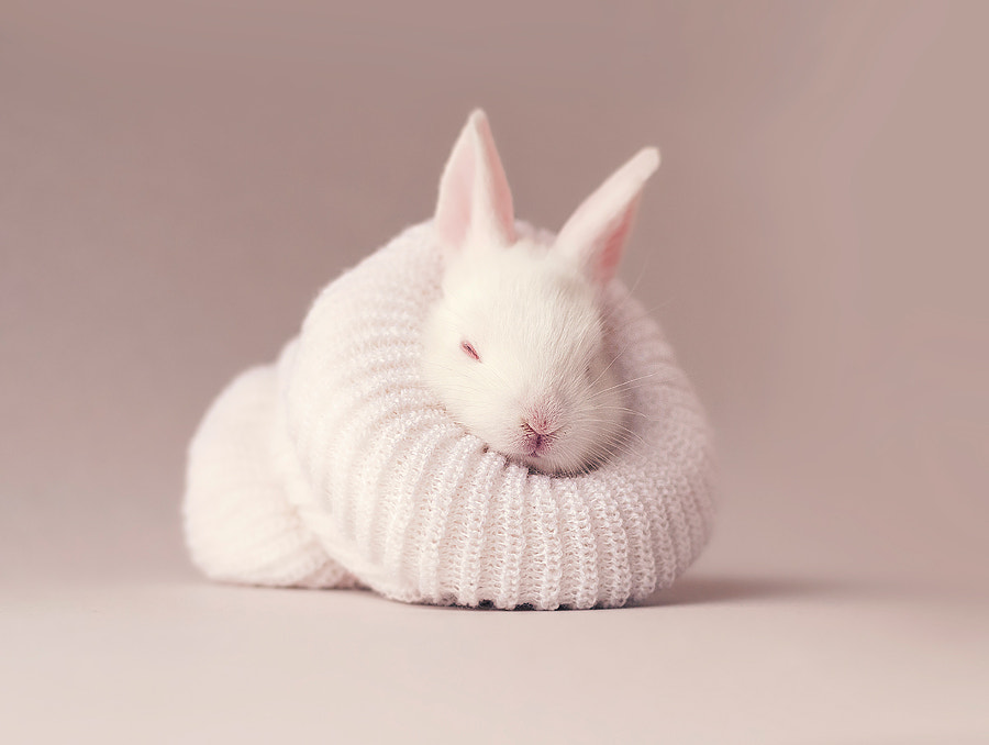 Cute sleeping baby bunny by Monsieur Arefin on 500px.com