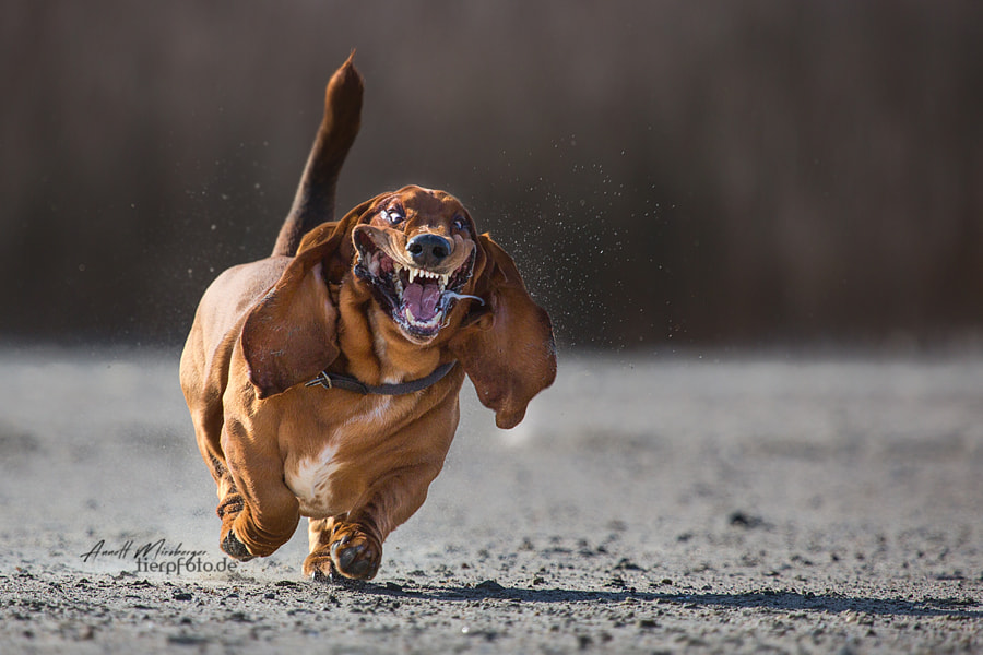 YEAH, it's Friday! by Annett Mirsberger 1