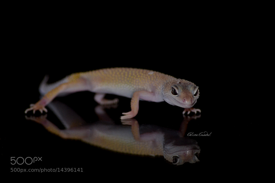Photograph Gecko by Céline Caudal on 500px