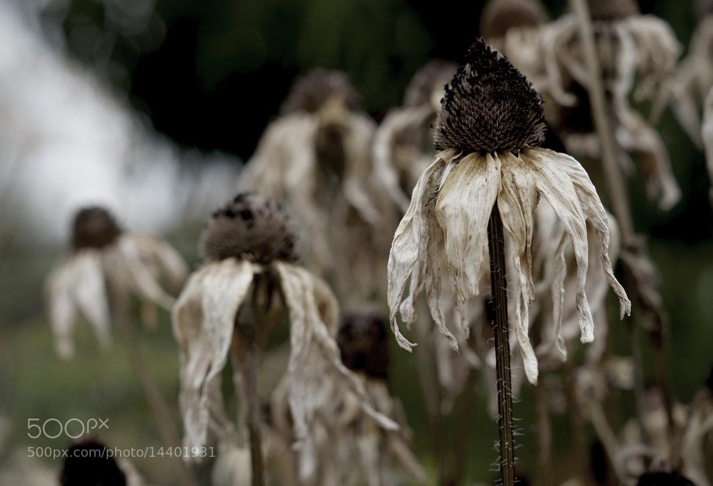 Photograph .................. by Krasimir Hintolarski on 500px