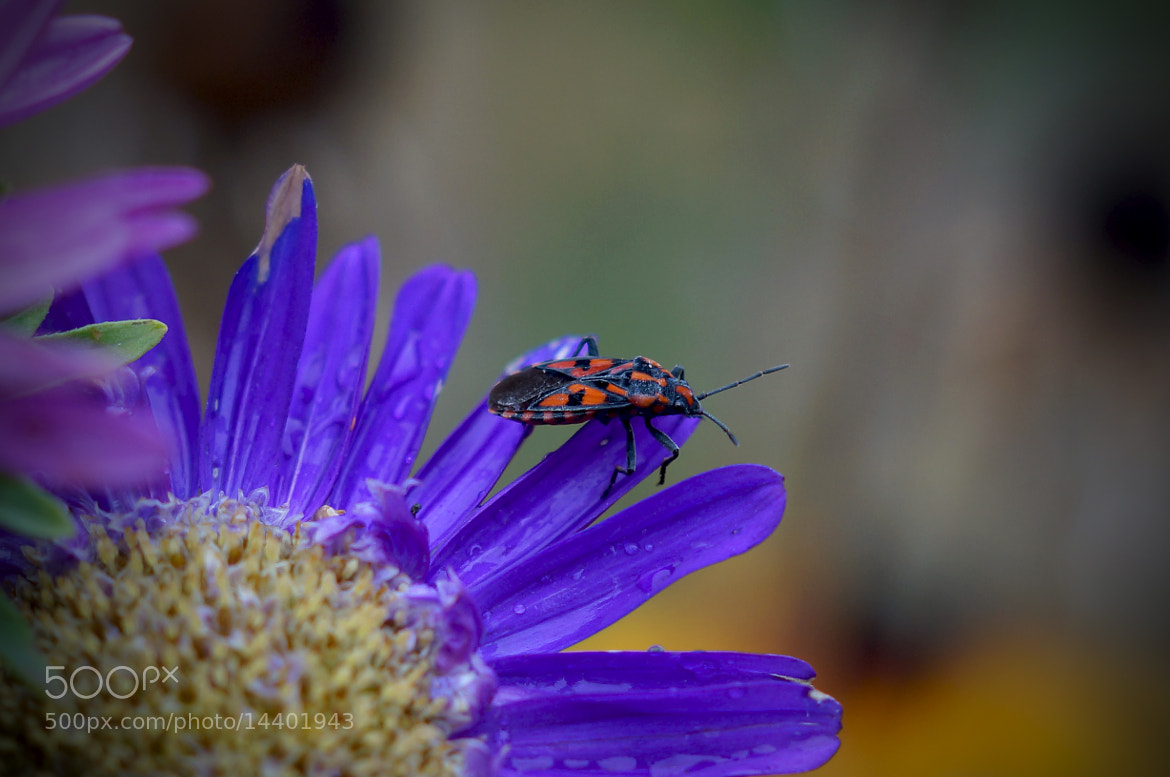 Photograph bug by Krasimir Hintolarski on 500px