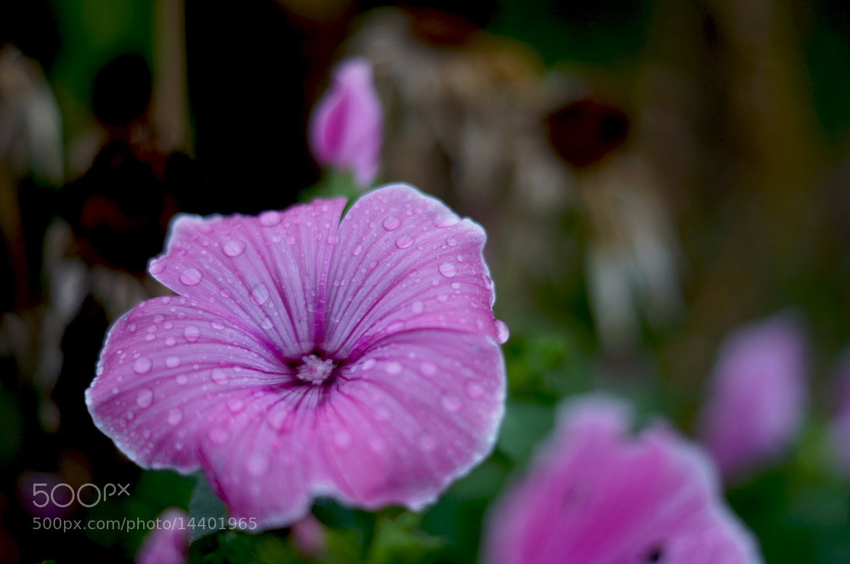 Photograph flower by Krasimir Hintolarski on 500px