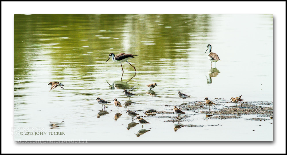 Photograph Gathering of Family & Friends by John Tucker on 500px