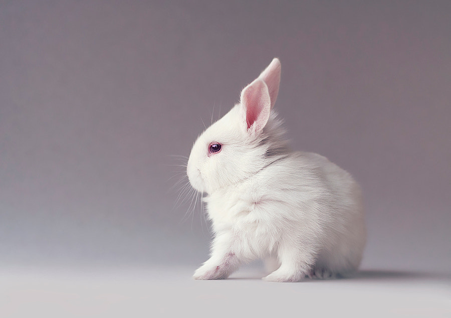 Cute little white baby bunny by Monsieur Arefin on 500px.com