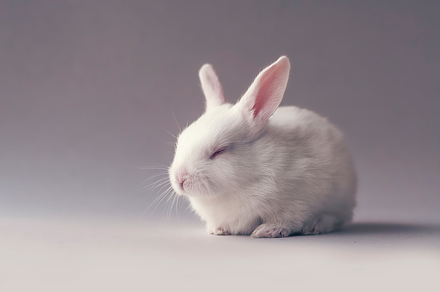 Cute little white sleepy baby bunny by Monsieur Arefin on 500px.com