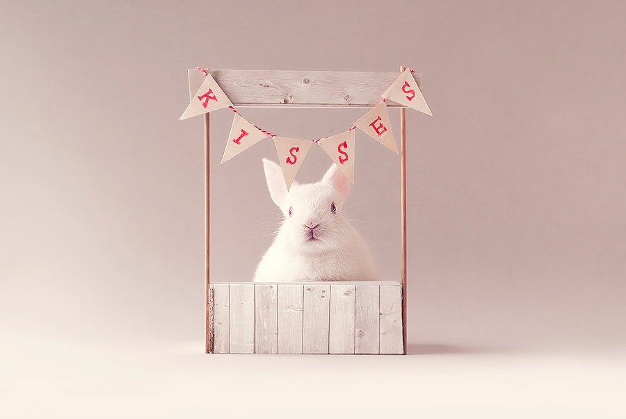 Cute little baby bunny in kissing booth by Monsieur Arefin on 500px.com