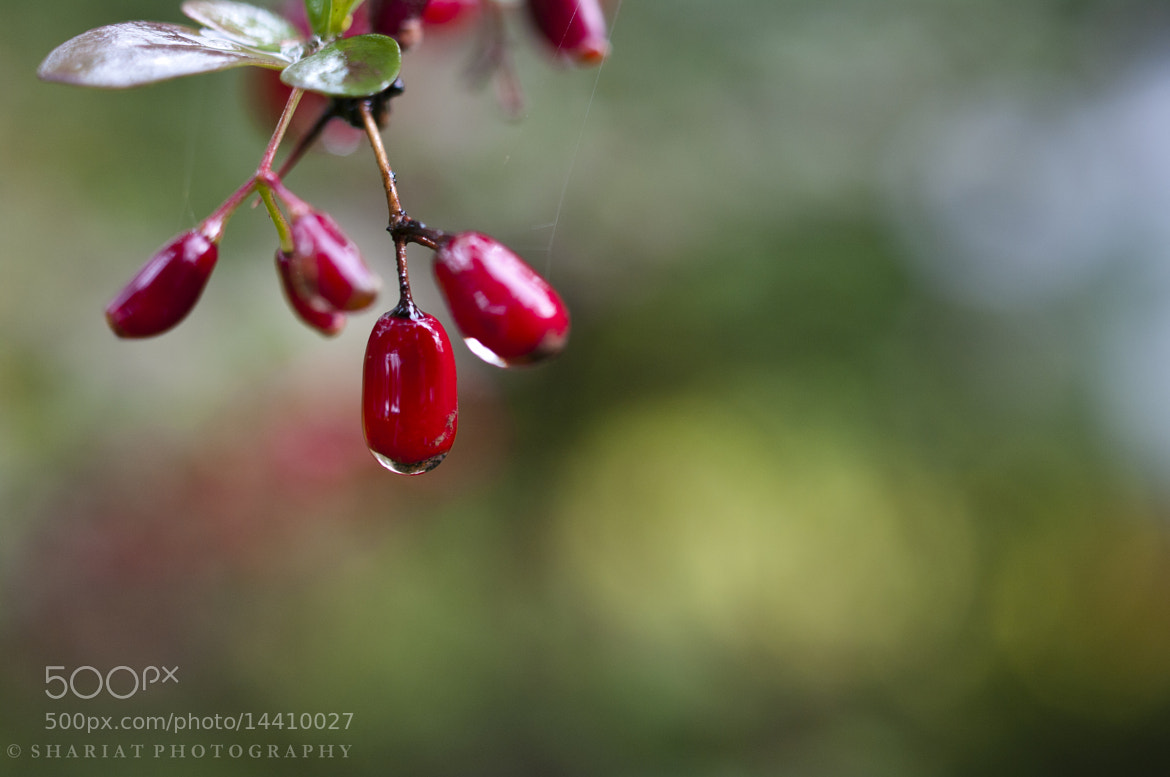 Photograph Garden Macro by Navid S on 500px