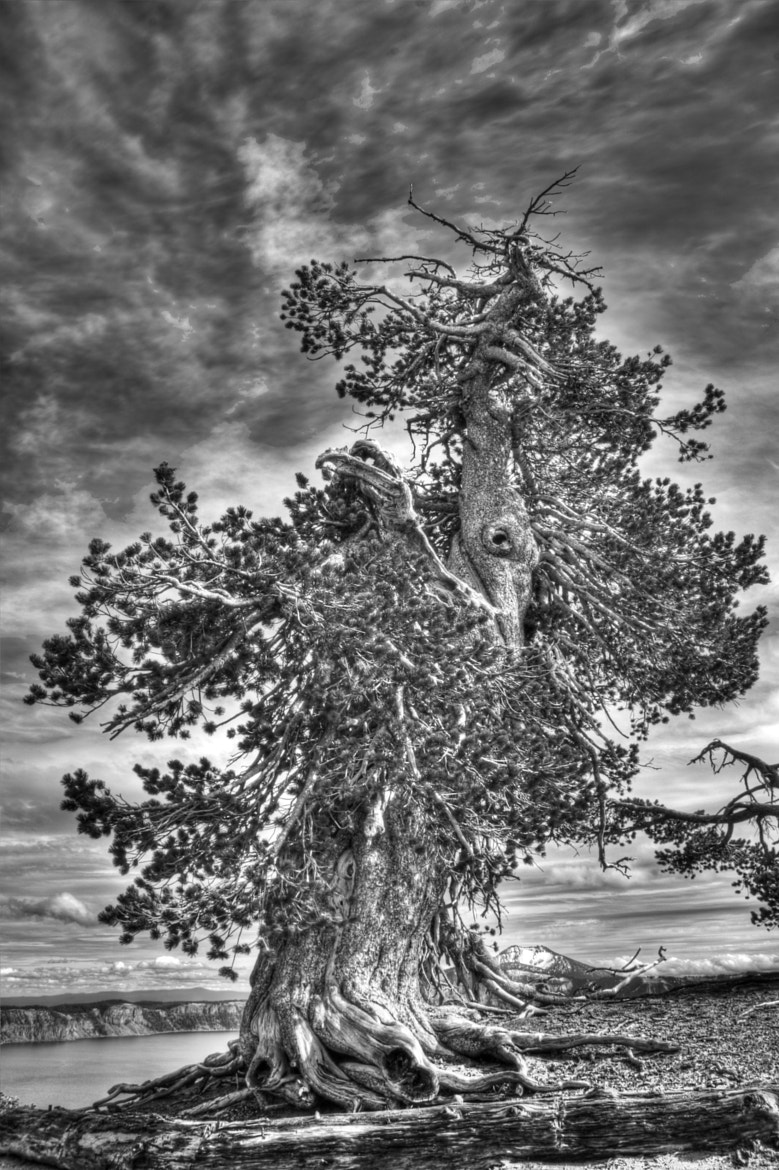 Photograph Ghost Tree by Steve Lents on 500px