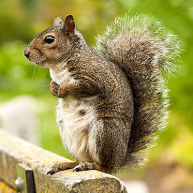 Squirrel by Jordan R (JordanR)) on 500px.com