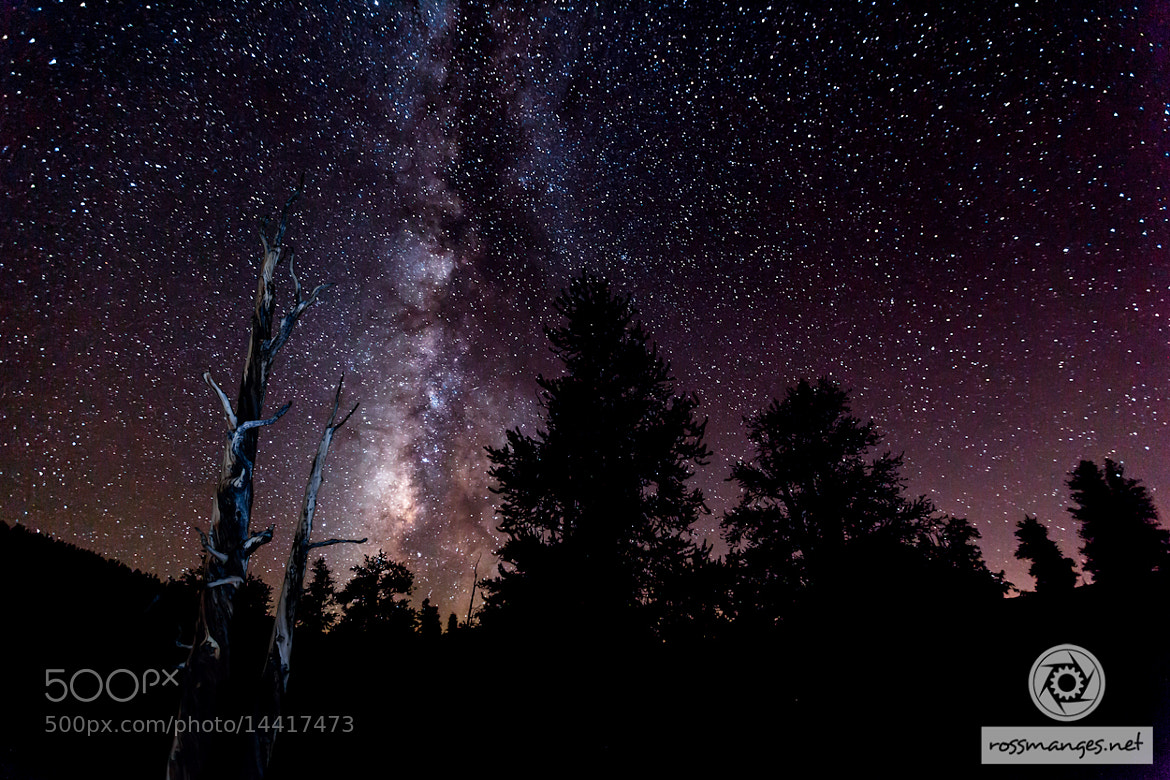 Photograph Bristlecone Night Sky by Ross Manges on 500px