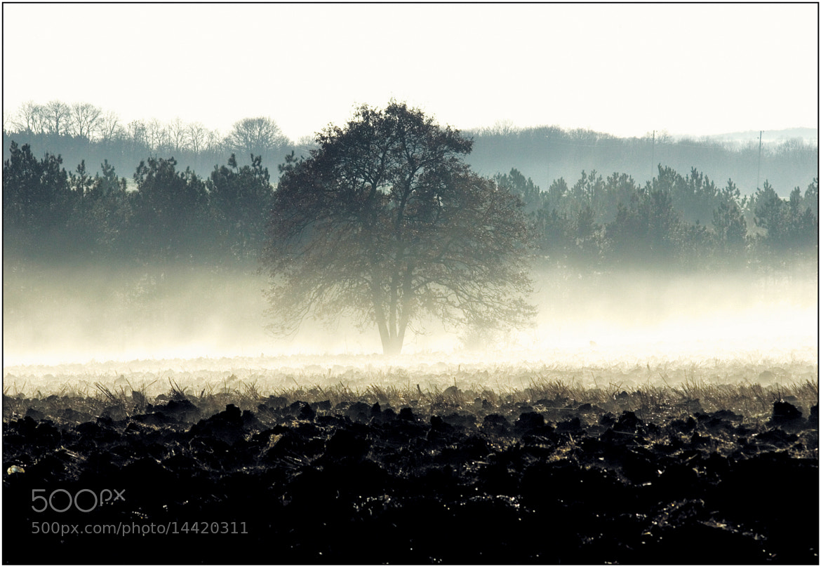 Photograph morning fog by Stancho Enev on 500px