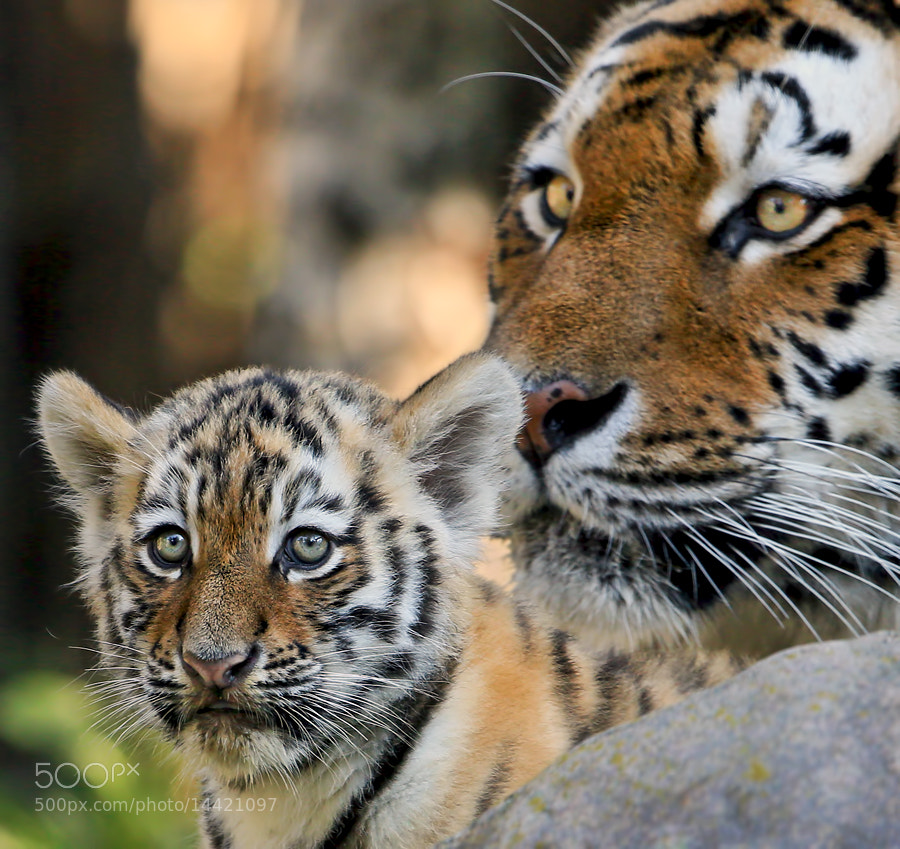 Photograph Me and Mom by Klaus Wiese on 500px