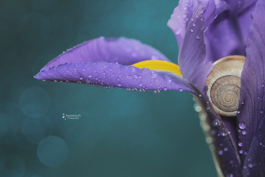 Hide and seek by Anastasia Ri on 500px.com