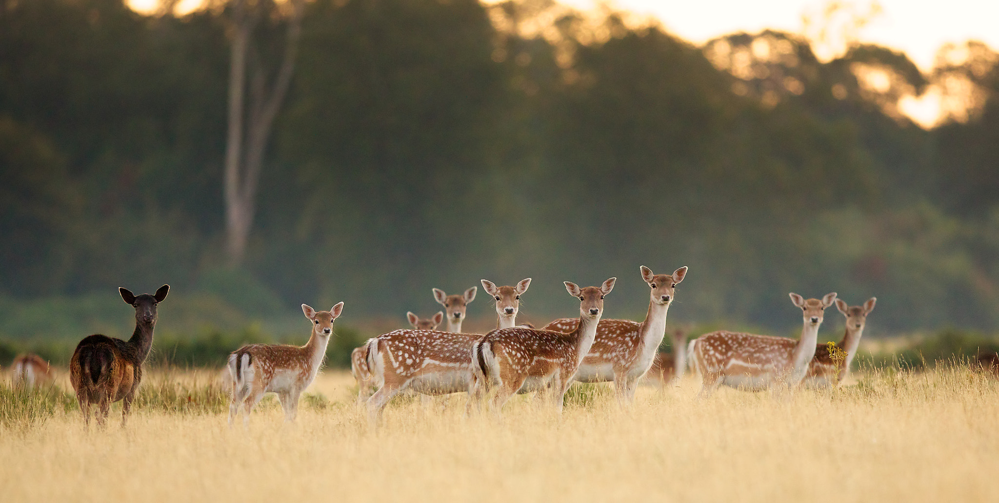 Photograph morning ladies by Mark Bridger on 500px