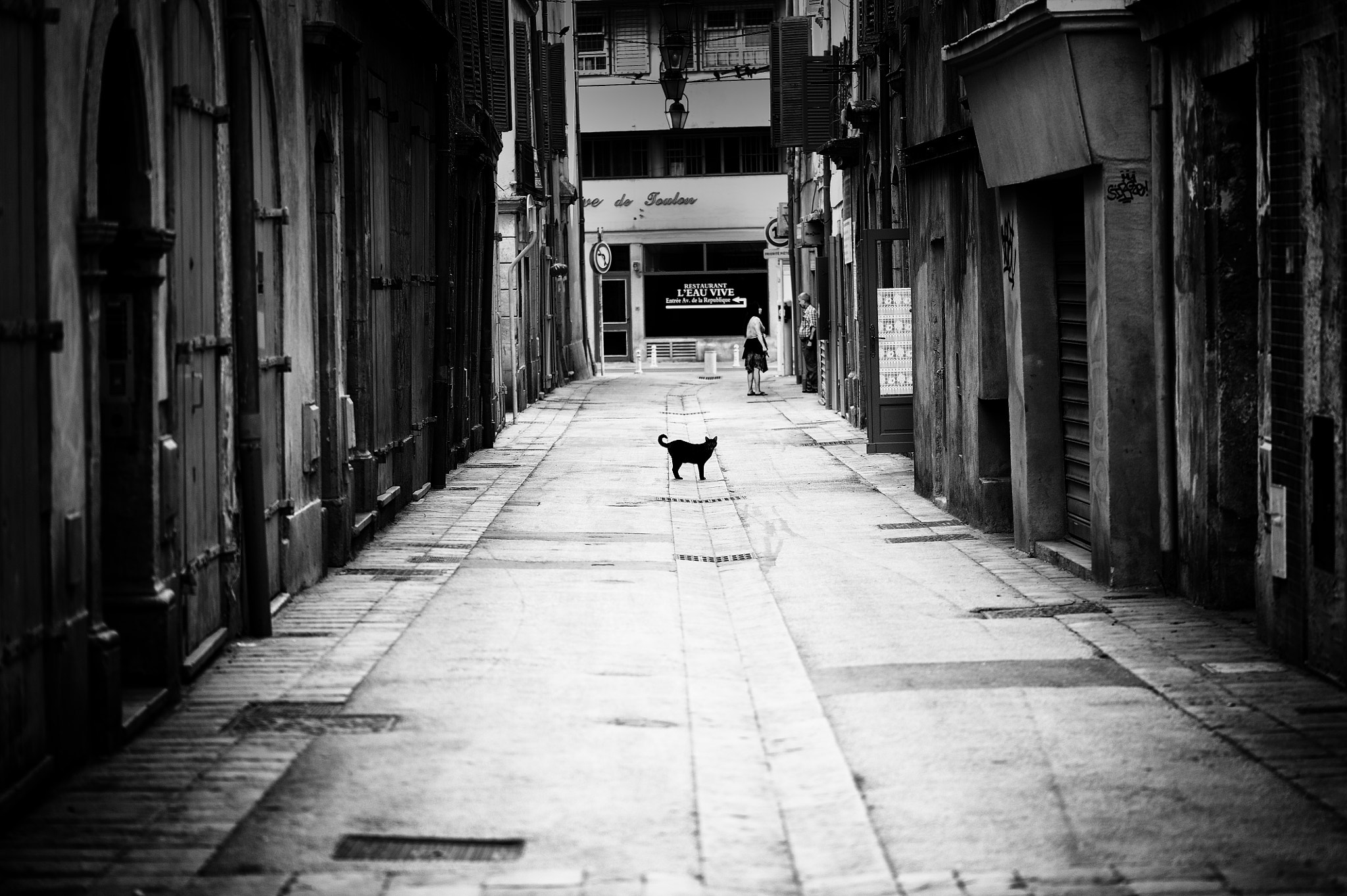 Photograph The cat by Laurent Y on 500px