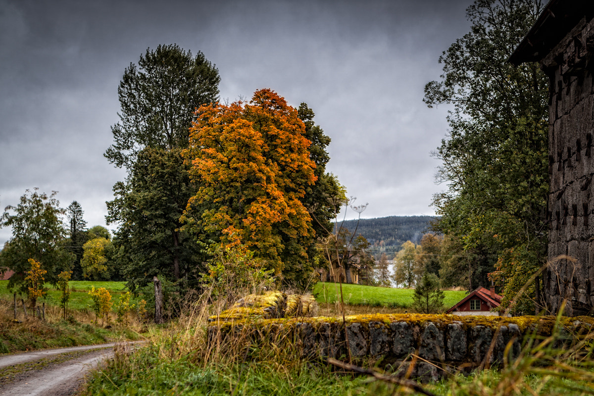 Photograph Autumn by Anders Johansson on 500px