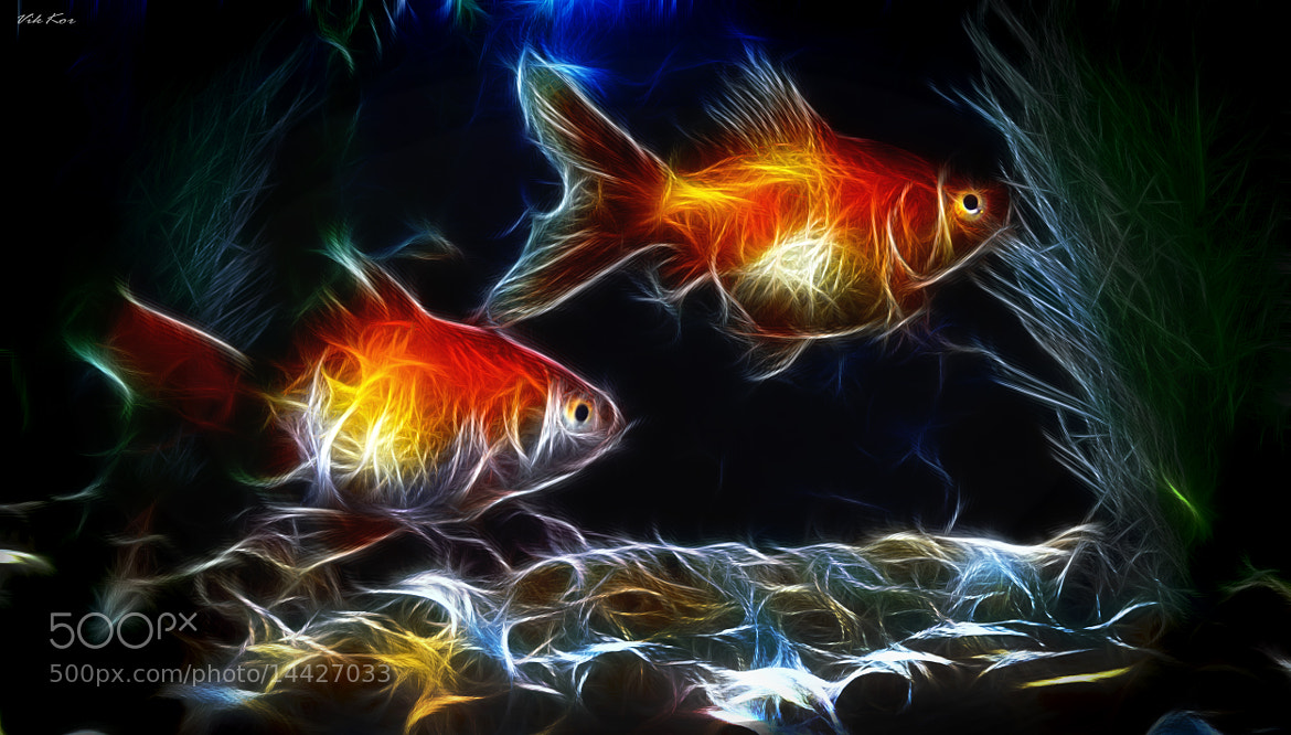 Photograph goldfish by Viktor Korostynski on 500px