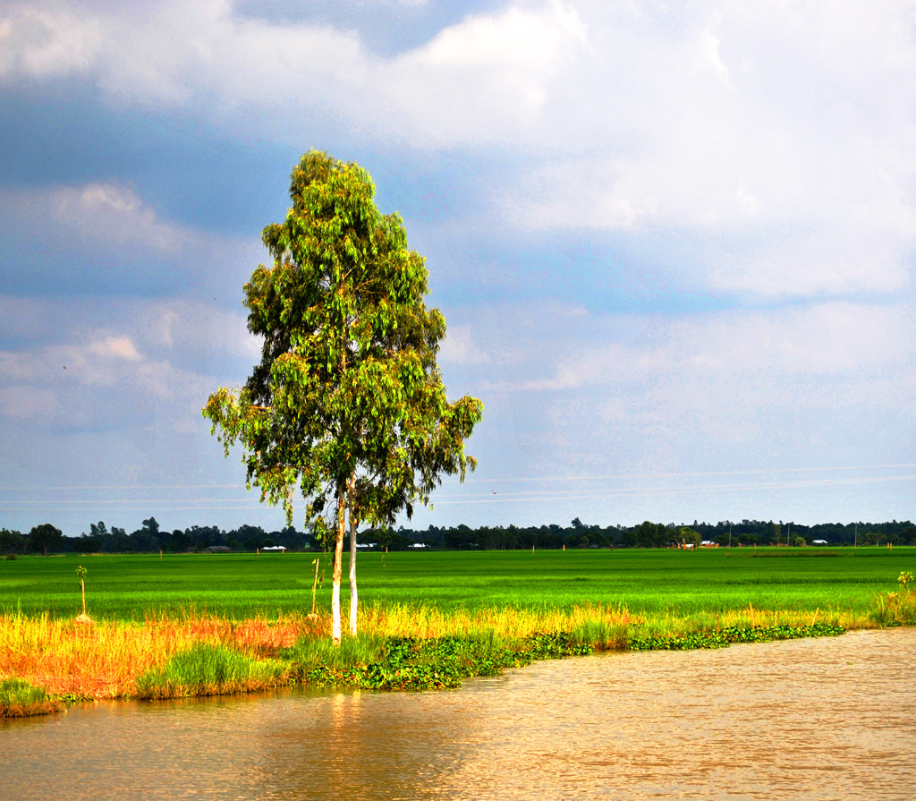 Photograph Country side by Motiur Rahman on 500px