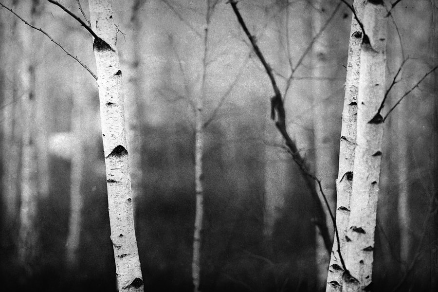 Photograph Trees by Miles Storey on 500px