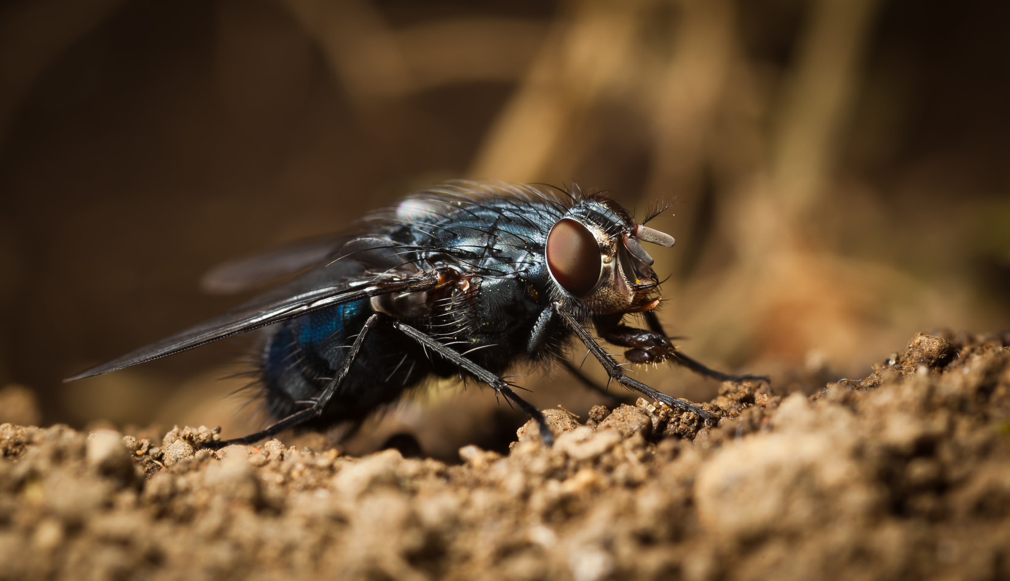 Photograph Fly by Ruben Tavares on 500px