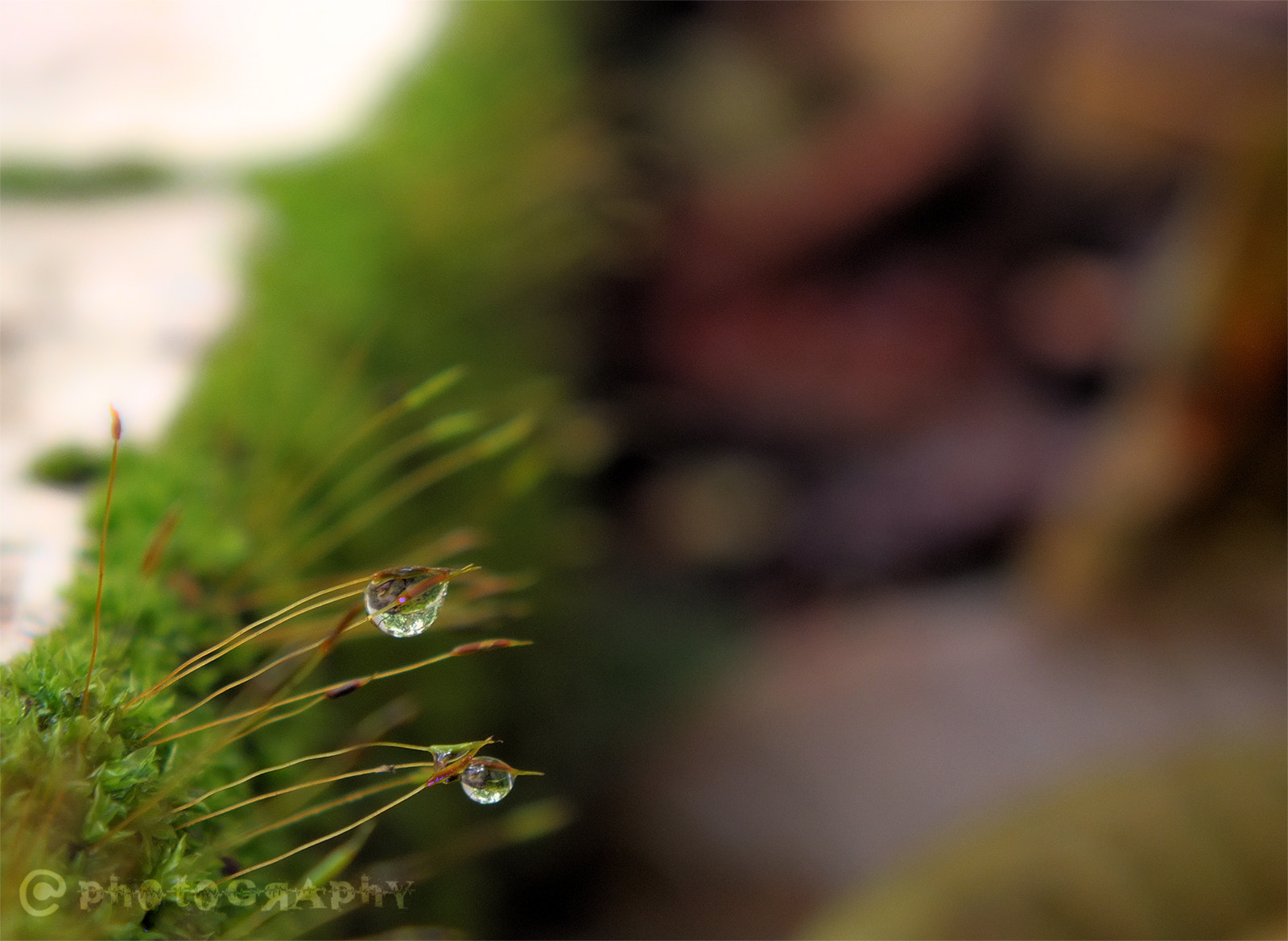 Photograph dew drops.. by arjun ☠ on 500px