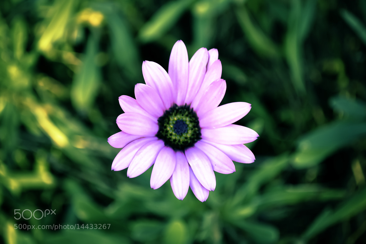 Photograph Flower Power by LiquidArtCreations  on 500px